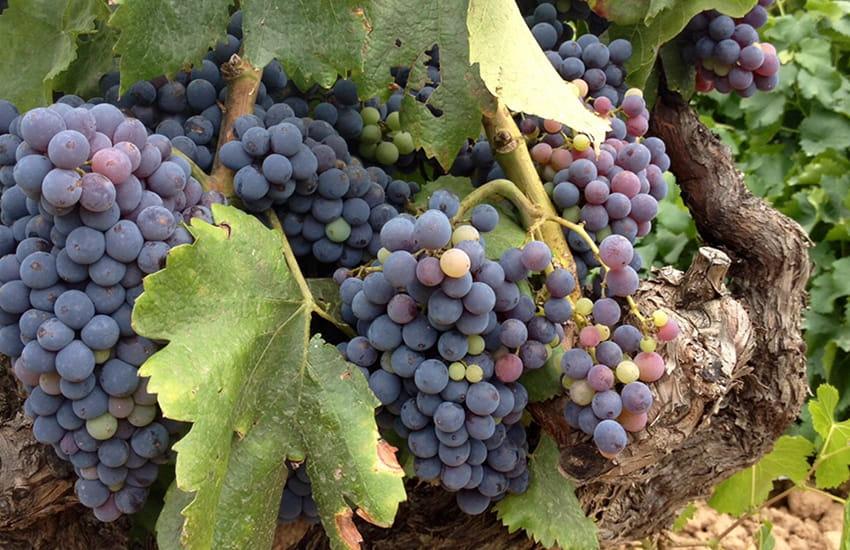 ruta matarraña bodegas vinos