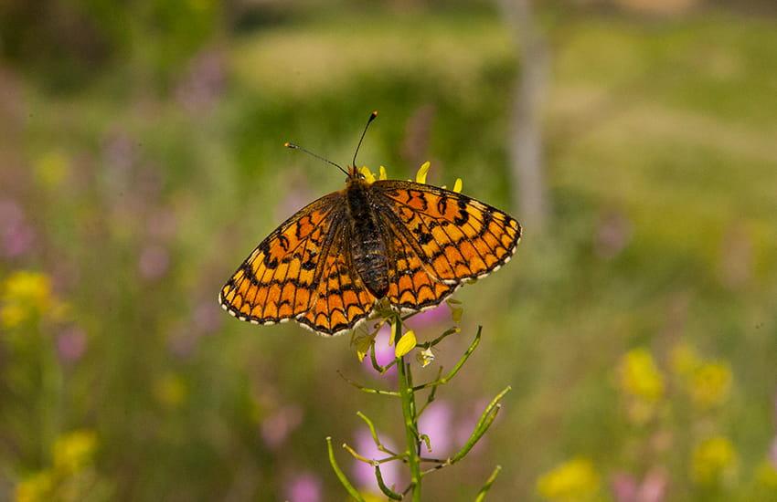 ruta matarraña biodiversidad